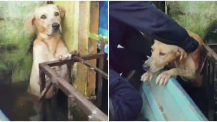Cane si salva dalla terribile alluvione del Messico aggrappandosi a una ringhiera