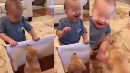Riceve un cucciolo come regalo di compleanno e quando lo vede non riesce a smettere di ridere