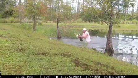 Si immerge nello stagno e affronta un alligatore: stava divorando il suo cagnolino