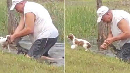 Pensionato salva il suo cane da un alligatore, a mani nude