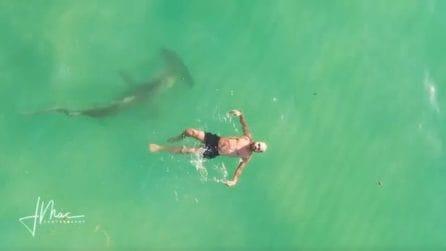 Un enorme squalo martello circonda l'uomo che si gode una nuotata: lui non si accorge di nulla
