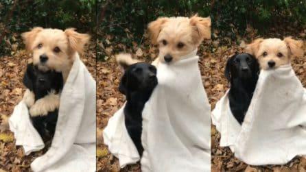 Fa freddo e i cagnolini si scaldano sotto una copertina