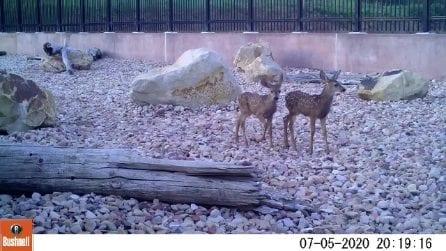 Le telecamere nascoste nel parco catturano uno spettacolo naturale mozzafiato