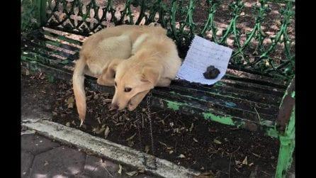 Lo trovano legato a una panchina, con un biglietto accanto che racconta una triste storia