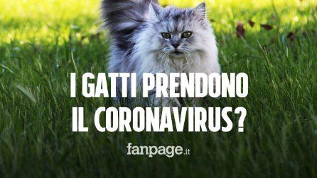 Perché alcuni animali prendono il Coronavirus e altri no? ecco la risposta dei ricercatori