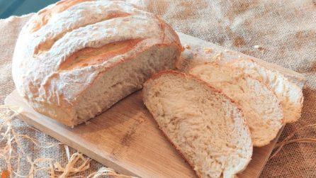 Pane casereccio fatto in casa: la ricetta per averlo croccante fuori e soffice dentro