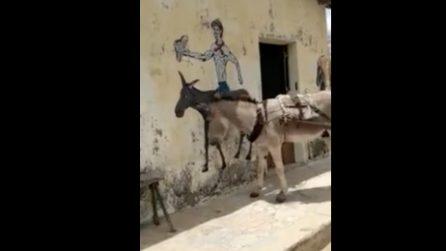 L'asino vede il disegno di un suo simile sul muro: la reazione è davvero inaspettata