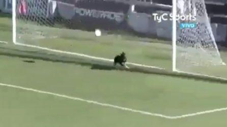 Invasione di campo durante la partita: il cane salva la squadra dal gol
