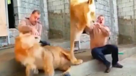 Il leone si ribella, domatore perde il controllo della situazione: immagini da brividi