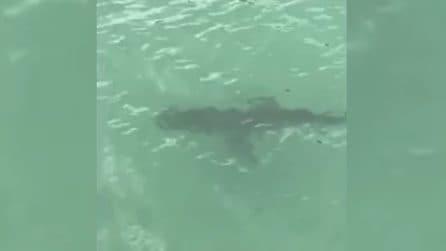 Presenza inquietante in acqua, bagnanti in fuga: lo squalo semina il terrore