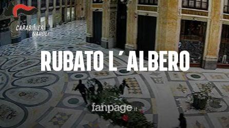 """Napoli, rubato (e ritrovato) l'albero di Natale in Galleria: """"Una ragazzata, come da tradizione"""""""