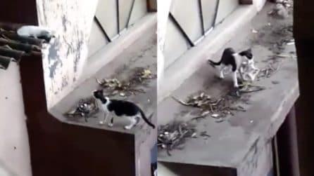 I due gattini non riescono a scendere, la mamma corre in loro soccorso: le immagini bellissime