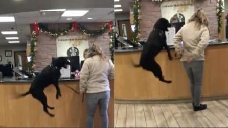 Porta il cane dal veterinario: la reazione del cucciolo è insolita