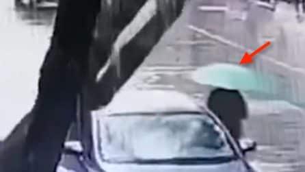 Albero cade in strada: una donna rischia di essere colpita