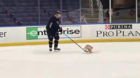 Intrusione durante la partita, rincorrono il cucciolo: le immagini esilaranti
