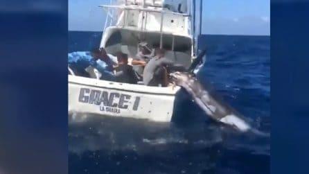 Ci vuole la forza di 5 persone: i pescatori catturano l'enorme marlin