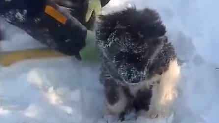 Arrivano prima che sia troppo tardi: cagnolino salvato dal congelamento