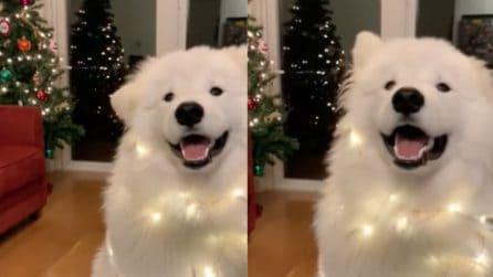 Il cane che ama il Natale: quello che riesce a fare a ritmo di musica è incredibile