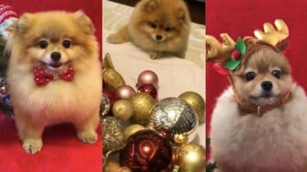 I due cagnolini che rendono il Natale più bello