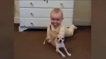 Due cuccioli giocano insieme: le espressioni sono tenerissime