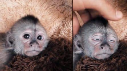Accarezza la scimmietta sulla testa: il piccolo animale va in estasi