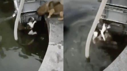 """Il gatto sta affogando, il cane """"eroico"""" si tuffa per salvarlo: le immagini emozionanti"""