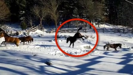 Arriva la neve, la reazione dei cavalli è inaspettata