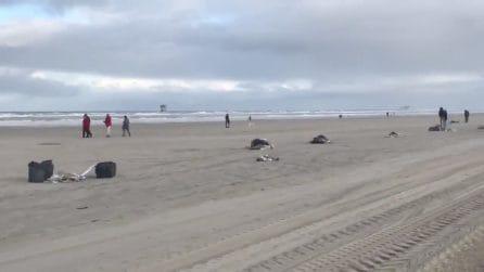 Mare del nord, la nave perde il carico: la spiaggia viene invasa da mobili