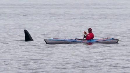 Vede sbucare dall'acqua una pinna: l'incontro ravvicinato col gigante dei mari