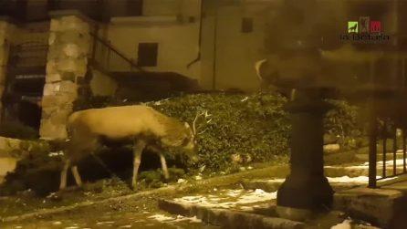 I cervi passeggiano tra le case: il paesaggio fiabesco in Abruzzo