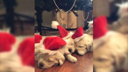Il pranzo di Natale mette KO proprio tutti: i dolci cuccioli sono stanchissimi