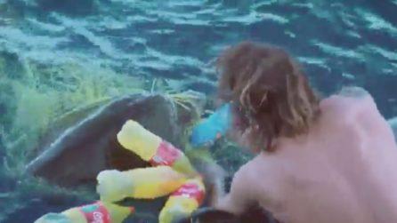 La tartaruga rischia di morire imprigionata nella plastica: le immagini impressionanti