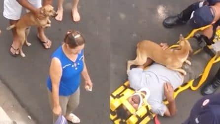 Il padrone viene portato via in ambulanza: la reazione del cucciolo è commovente