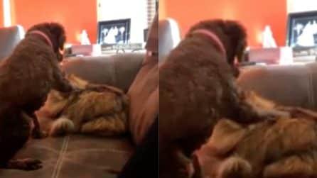Il cane accarezza il gatto, il felino lo abbraccia: la tenera scena tra i due animali