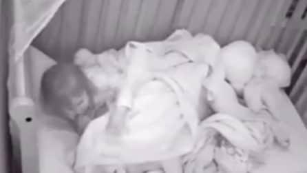 La bimba dorme con il suo pitbull: poi si sveglia e rimbocca le coperte al cane
