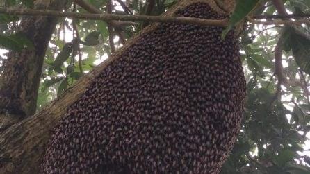 Il comportamento delle api quando si sentono minacciate: l'effetto ipnotico