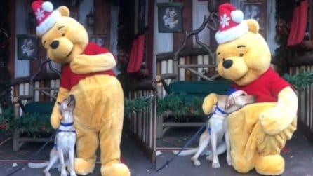Incontra il suo personaggio preferito: la tenera reazione del cane