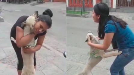 La cagnolina si era persa, ma il momento in cui ritrova i suoi padroni è commovente