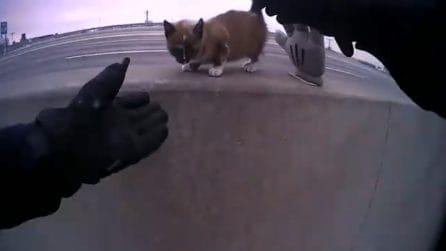 Gattino viene salvato dal poliziotto e lo ringrazia: quello che fa è tenerissimo