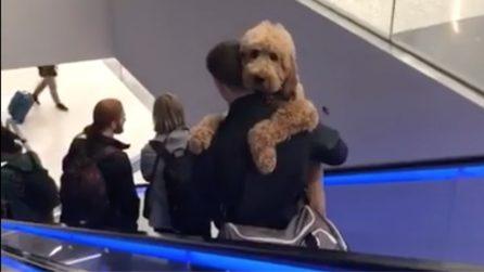 Il cane ha paura delle scale mobili, il padrone lo trasporta in braccio: la scena tenerissima