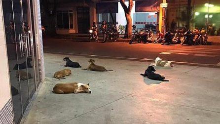 Il padrone viene ricoverato d'urgenza in ospedale: il gesto commovente dei suoi sei cani