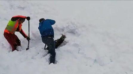 Soccorritori scavano nella neve e portano in salvo il camoscio sommerso