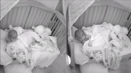 Il cane entra nel letto, quello che fa la bambina è tenerissimo: le telecamere riprendono tutto