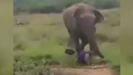 Si avvicina e fa un gesto verso l'elefante, l'animale reagisce male e lo calpesta