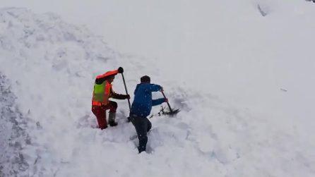 L'animale è in fin di vita sepolto dalla neve: il macchinista ferma il treno per salvarlo