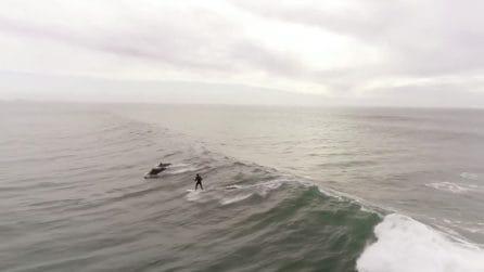 Surfa tra le onde quando un branco spunta improvvisamente dall'acqua: immagini spettacolari