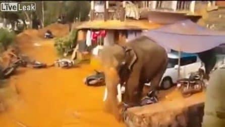 L'elefante si spinge fino al centro abitato e la sua furia si abbatte sui presenti
