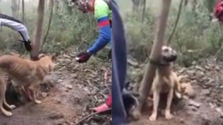 Trovano la cagnolina legata all'albero in fin di vita: il drammatico salvataggio