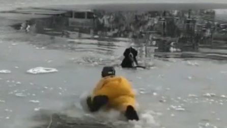 Cane bloccato nel lago ghiacciatoo: il pompiere è un vero eroe