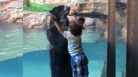 Il bambino fa visita all'orso e inizia a saltare: l'inaspettata reazione dell'animale